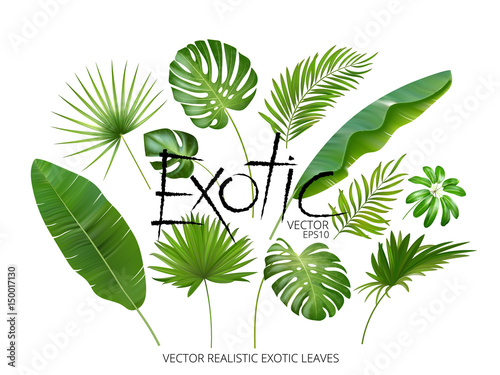 Foto  Vector tropical exotic leaves, realistic jungle leaves set isolated on white background
