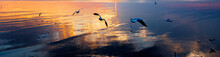 Winter Escape Seagulls From Fridge Zone And Temperate Zone