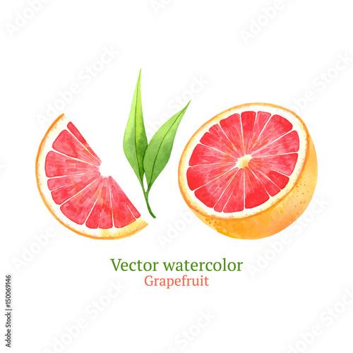 Fototapeta Watercolor vector grapefruit