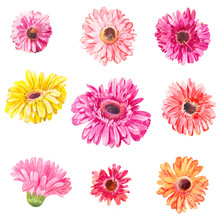 Set Of Pink And Yellow Gerbera's Heads