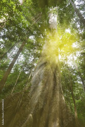 In de dag Bomen Tropical forest.