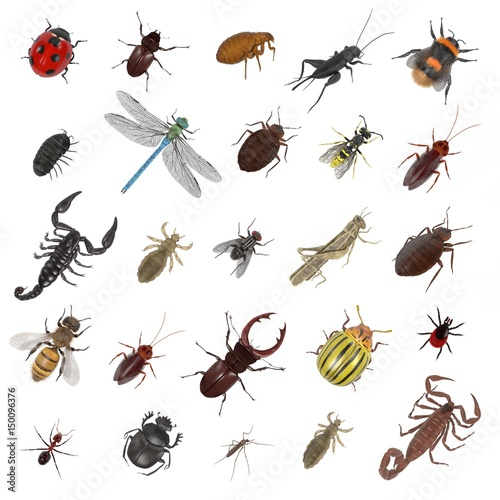realistic 3d render of insect - large collection Tableau sur Toile