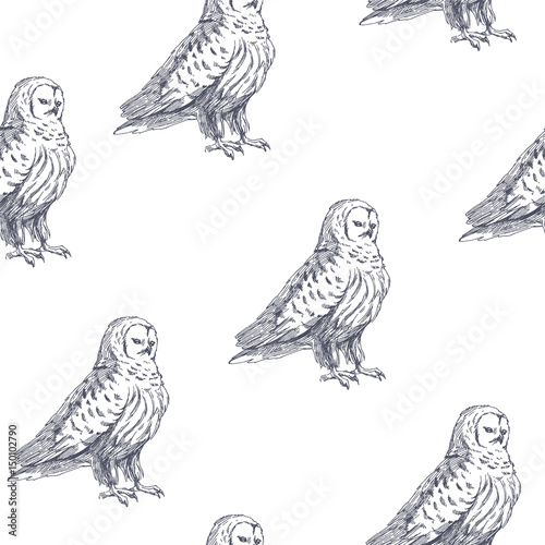 Canvas Prints Owls cartoon Vector seamless pattern with cute owl. Hand drawn illustration with wild birds