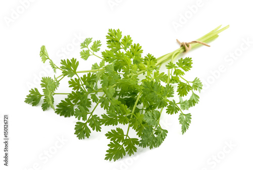 Fresh Chervil bunch