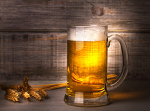 Glass Of Beer And Barley Cereal Grain. Beer Still Life