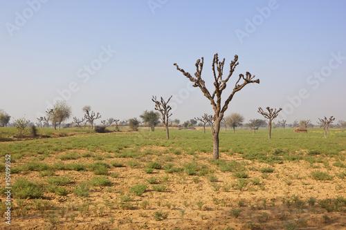Poster Afrique rajasthan arid landscape