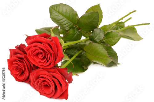 Red rose on a white background © natali1991