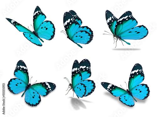 six monarch butterfly