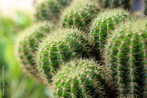 Foto op Canvas Cactus A close up cactus plan