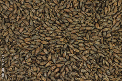 Valokuva  Grains of burnt barley abstract background