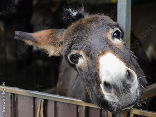 Canvas Print kind donkey