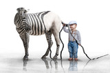 Fototapeta Zebra - Zebrastreifen Kontrolle