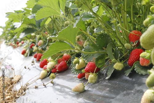 Foto  tarım