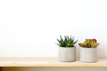 Succulent Plants On Wood Table...
