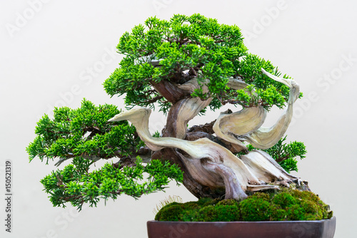 Deurstickers Bonsai 花物語