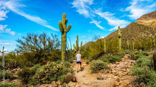Photo  Woman on a hike on the hiking trail surrounded by Saguaro and other Cacti to the
