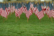 Rows Of American Flags On A Gr...