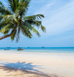 coconut palm tree with sky for summer and the beach concept background, coconut tree with sky at Koh Tao,Thailand