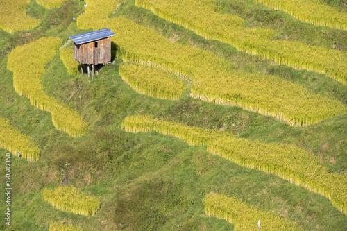 Poster Rijstvelden Asia, Bhutan, Trongsa Area. Rice paddies.