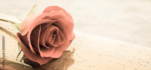 romantyczna-czerwona-roza-z-filtrem-w-stylu-retro