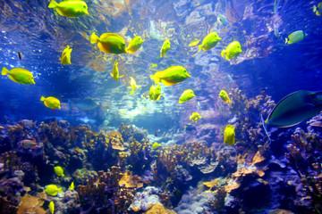 Fototapeta na wymiar Colorful tropical fish living in coral reefs of Maui, Hawaii