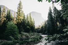 El Capitan By The Merced River