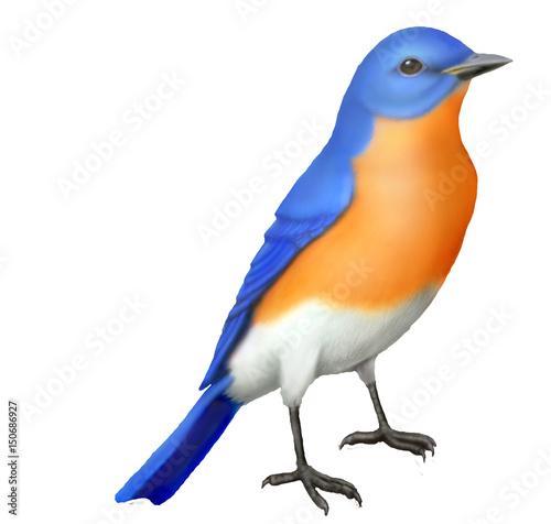 Eastern Bluebird Illustration Canvas-taulu