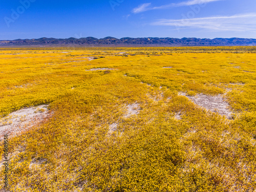 Honey aerial of Soda Lake and goldfields in bloom, Carrizo Plains National Monument, California