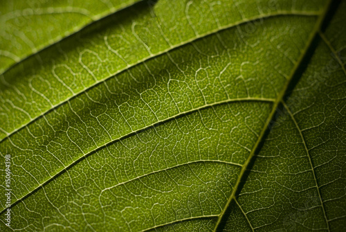 Macro close up green leave pattern
