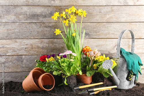 Cadres-photo bureau Narcisse Composition with flowers and gardening tools on wooden background