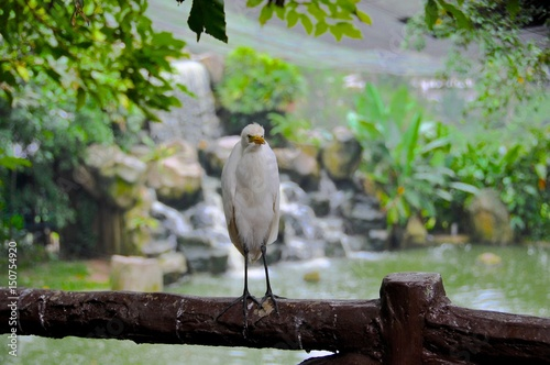 Photo  Malaysian Bird Park 43