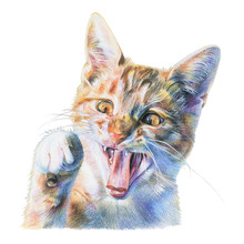 Red Cat Painted With Colored Pencils. Funny Little Tricolor Kitten With Raised Paw. Isolated Illustration On White Background