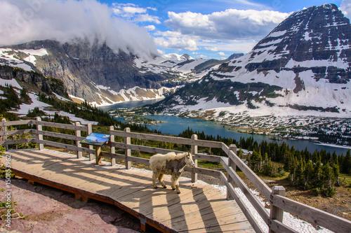 Obraz na płótnie Hidden Lake, Glacier National Park, Montana