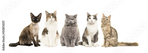Group of different breed of cats sitting looking at the camera isolated on a whi Fototapete