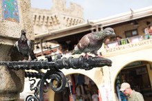 Rhodes City Center. Pigeon Drinking From A Fountain