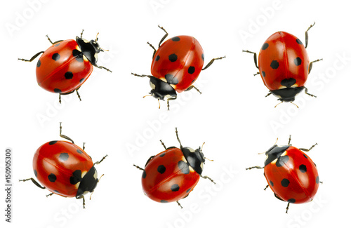 Photo  Collection of ladybugs