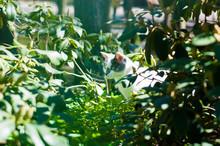 Cat Hiding Between Rhododendro...