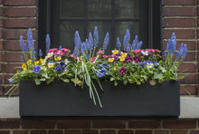 Flower Filled Window Box In Ne...