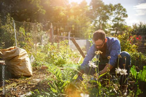 Fényképezés man planting crops in communal garden