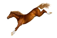 A Jumping Horse On White Backg...