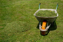 Old Wheelbarrow With Fresh Grass Clippings In Spring