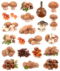collection of mushrooms