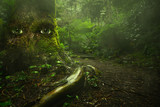 big tree with eyes in tropical mysterious green forest with fairytale light. live nature concept