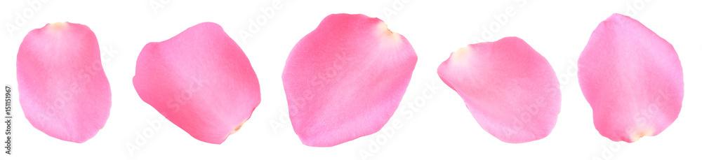 Fototapeta pink rose petals