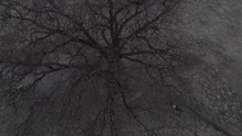 Top View Of A Dense Branch Of A Lonely Tree That Stands In The Field