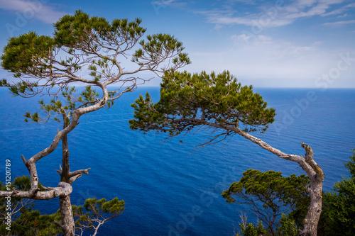 Obraz pin surplombant la méditerranée - fototapety do salonu