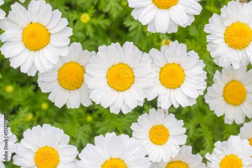 Fotografie, Obraz  かわいいお花