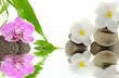 orchidée et fleurs blanches de frangipanier sur galets