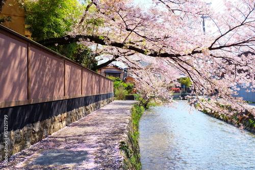 Fotografering  春の祇園白川