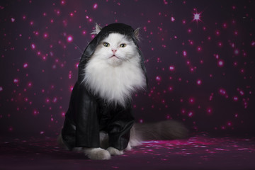Cat in a leather jacket on a bright background